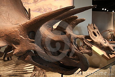 Ceratopsian (marginocephalian dinosaur) Editorial Stock Photo