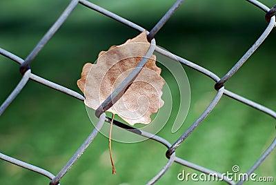 Cerca da ligação Chain e folha inoperante