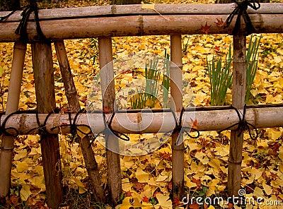 Cerca do japonês do outono