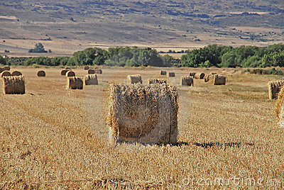 Cereal Bales