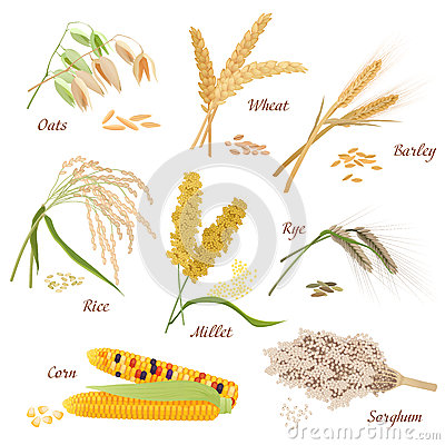 Free Cereal Plants Vector Icons Illustrations. Oats Wheat Barley Rye Millet Rice Sorghum Corn Set. Royalty Free Stock Photo - 78861035