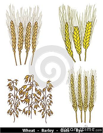 Cereals illustration