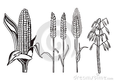 Cereals illustration