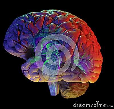 Cerebro en negro