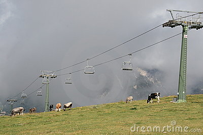 Cermis: Chair Lift and cows in clouds