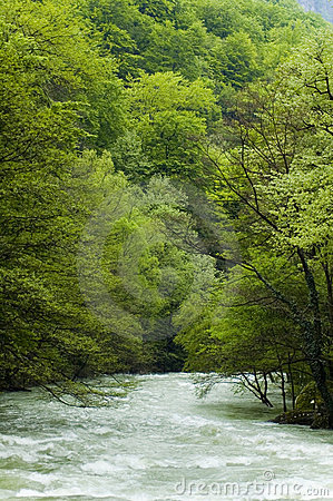 Cerna River In Romania