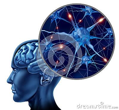 Cervello umano con la fine in su dei neuroni attivi