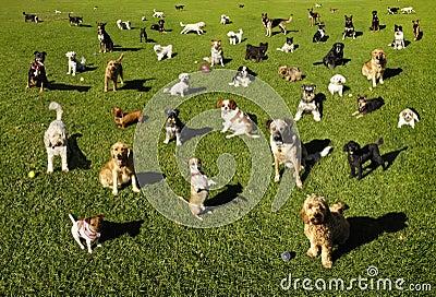 Cães no parque