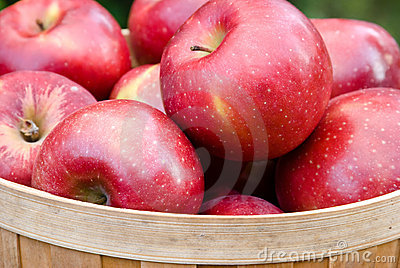 Cestino delle mele