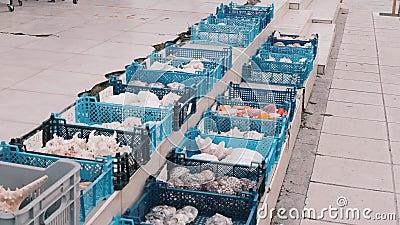 Cestos azuis do mercado da pesca com conchas, ostras, estrelas do mar, conchas, infernos, souvenires de moluscos video estoque