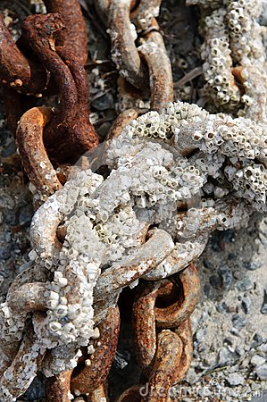 Chain with barnacles