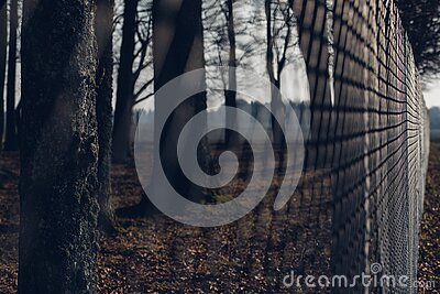 Chain Link Fence With Trees In Background During Twilight Free Public Domain Cc0 Image