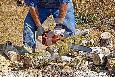 Chain Sawing Poplar Logs