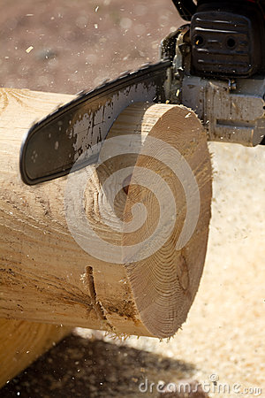 Chainsaw cutting  tree