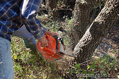 Chainsaw and saw dust