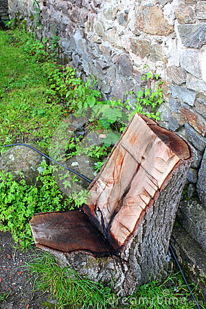 Chair of a tree trunk