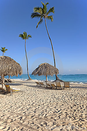 Chairs on the beach under palm tree