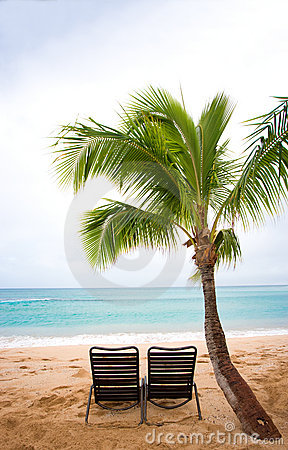 Chairs and palm tree