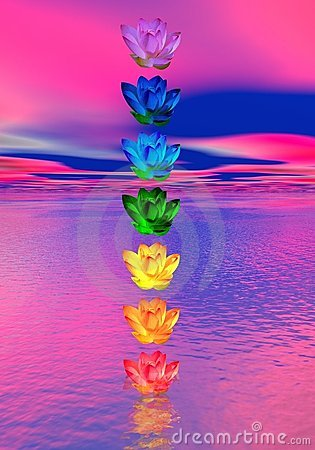 Free Chakra Colors Of Lily Flower Royalty Free Stock Image - 22156776