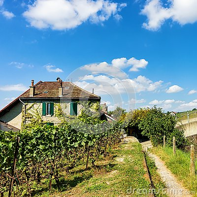 Free Chalet In Lavaux Vineyard Terraces Hiking Trail Lavaux Oron Stock Photography - 89991402