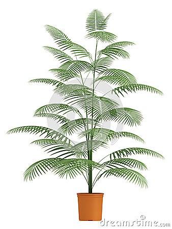 Chamaedorea palma w zbiorniku