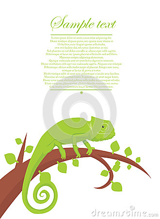 Chameleon background