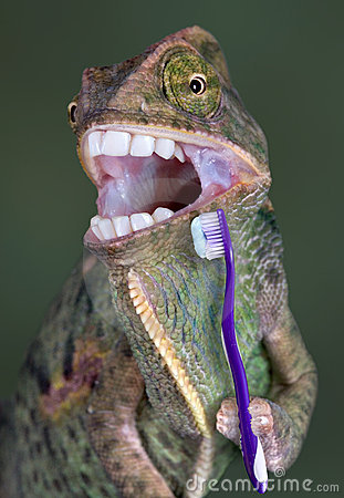 Chameleon brushing teeth