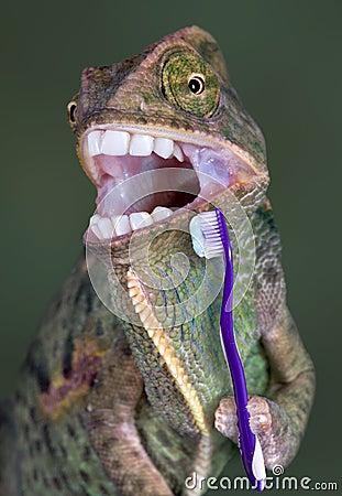 Free Chameleon Brushing Teeth Royalty Free Stock Image - 4783076