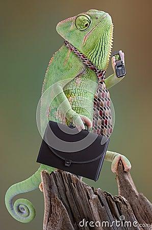 Chameleon Businessman