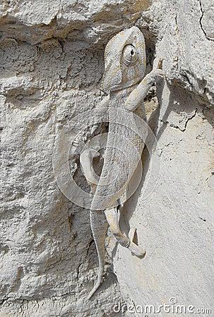 A chameleon climbing