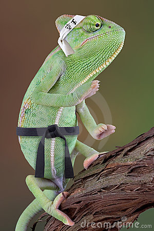 Free Chameleon Karate Kid Stock Photo - 4783340
