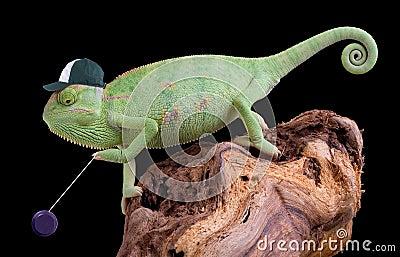 Chameleon yo yo