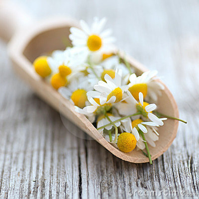 Free Chamomile Royalty Free Stock Images - 23738819