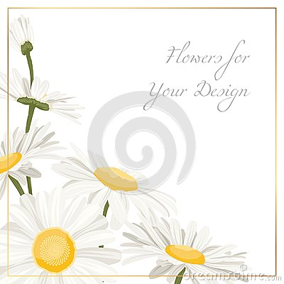 Free Chamomile Daisy Flowers Herbs Bouquet Isolated Royalty Free Stock Images - 118212079