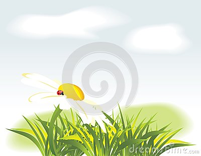 Chamomile and ladybird among grass