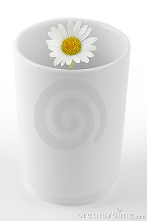 Chamomile in Mug