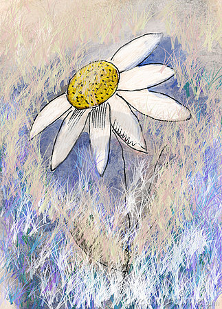 Chamomile painting