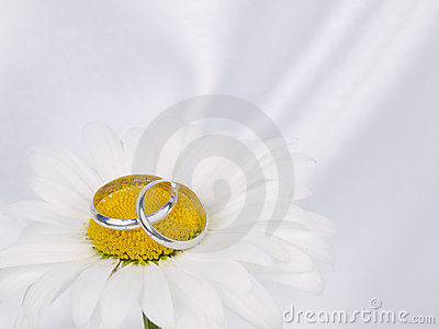 Chamomile and two weddings rings