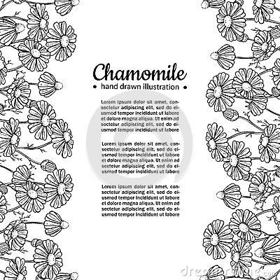 Chamomile vector drawing frame. Isolated daisy wild flower and leaves. Herbal engraved style illustration. Vector Illustration