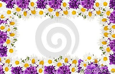 Сchamomiles and  purple carnation frame