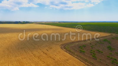Champ de vignoble et de blé dans la campagne ciel bleu avec les nuages blancs ci-dessus banque de vidéos
