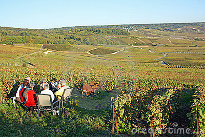 Champagne tasting in the vineyard Editorial Stock Image