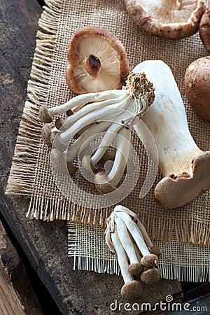 Champignons de couche sauvages