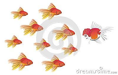 Champion Fish