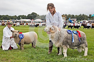 Champion sheep Editorial Stock Image