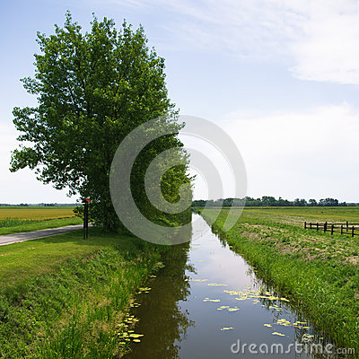 Channel and trees