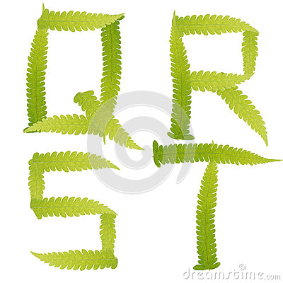 Character green leaves fern isolated