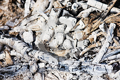Charcoal and white ash of extinguished bonfire