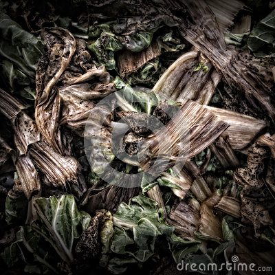 Chard Leaves on a Compost Heap