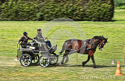 Chariot de Trec Photo stock éditorial